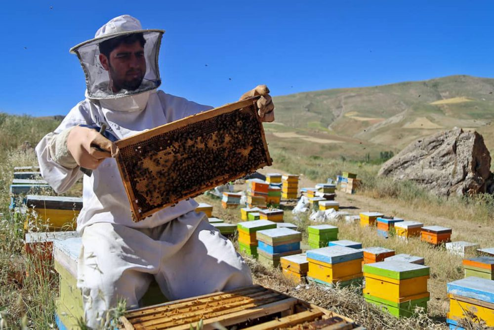 Collect honey from the hive
